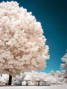 Magnificent Trees around the World !! Part 1 !! - Asheville, North Carolina.