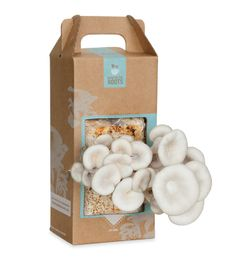 Grow-Your-Own Mushroom Garden Kit