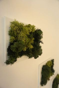 Have your own nature at home! Bring nature home with this amazing Iceland moss picture. It does not just make you more relaxed, but the best green decoration for your home or office. Do not hold back yourself if you want to pet it, it feels awesome! Awesome, Amazing, Herbs, Make It Yourself, Green, Nature, Pictures, Handmade, Naturaleza