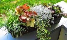 Výsledek obrázku pro podzimní truhlíky