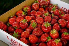 Gorgeous strawberries from Plant City, Florida. Miss Florida, Florida Style, Florida Living, Old Florida, Florida Vacation, Florida Travel, Florida Home, Florida Trips, Tampa Florida