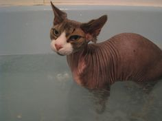 """""""You don't make friends bathing cats."""" http://365project.org/bluefescue/365/2012-02-05#.TzCGBA6NvH8.facebook"""