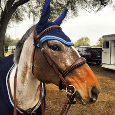 C&C Filly Finery co-founder @kuhlowe's mare Champagne N Candlelite represented C&C at #HITSOcala this winter. #prettyproductsforprettyponies #hunterjumper #beadsnshinythings #equestrian #jumperstyle #styleyoursteed #fillyfinery