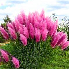 Clay Flower Pots, Yard Design, Garden Trees, Outdoor Landscaping, Flowering Trees, Yard Art, Indoor Outdoor, Beautiful Flowers, Grass