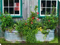 "30 in. x 40 in. """"Flower Tub"""" Outdoor Canvas Art, NA Outdoor Wall Art, Outdoor Walls, Indoor Outdoor, Outdoor Living, Parasols, Patio Umbrellas, Art Mural En Plein Air, Garden Wall Art, Wall Lantern"
