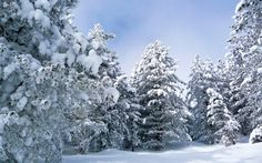 Snowy Landscape HD Wallpaper