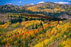 Northern New Mexico Aspen | by 4 Corners Photo