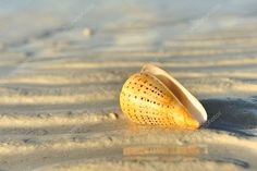 Shell on a beach Stock Photo , #AD, #beach, #Shell, #Photo, #Stock #AD
