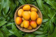 diabetes cure with mango leaves is possible. curing diabetes with home remedies is so simple. and try this mango leaves remedy. Mango Fruit, Mango Tree, Vicks Vaporub, Mango Health Benefits, Mango Varieties, Anti Cholesterol, La Constipation, Fruit Photography, Seasonal Allergies
