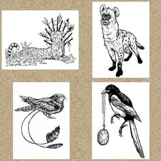 "Instagram media by artbykatekennedy - Hi everyone!  So I'm thinking about releasing some 5x7"" prints in the near future.  Probably 2-3 out of these 4 options.  What do you guys think?  Any of these appeal to you? Thanks for any feedback! 💜 (Voodoo cheetah, hyena, nightjar, magpie with horcrux)  #drawing #illustration #ink #inkdrawing #kuretake #brushpen #artprints #inkart #animalart #animaldrawing #cheetah #hyena #nightjar #magpie #raleighnc #northcarolina"