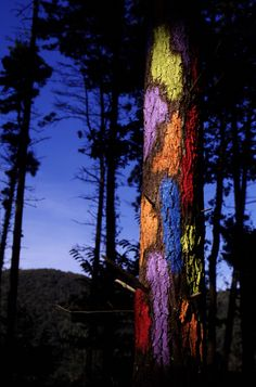 Bosque de Oma- The painted forest |