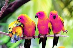 These birds know all about how awesome PINK is for summer! ;)