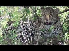 My Masai Mara Safari Highlights.