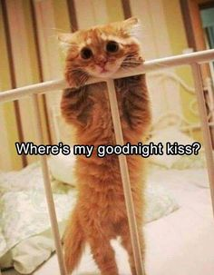 Ginger Cat Want Good Night Kiss
