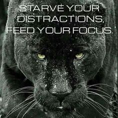 ...starve your distractions, feed your focus...