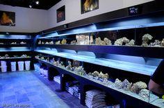 style 2 Aquarium Store, Nano Aquarium, Marine Aquarium, Aquarium Fish, Aquarium Terrarium, Store Plan, Fish Breeding, Siamese Fighting Fish, Animal Room