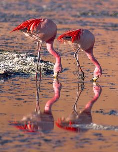 James's Flamingo by szeke, via Flickr