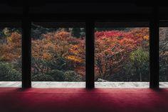 Kōzanji-temple in Kyoto by Miki Fujii.