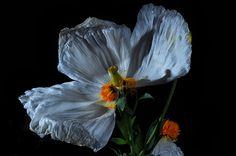 Faded Flowers | by Bill Gracey