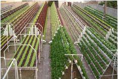 Becovillage | AQUAPONIC FARM
