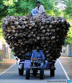 SRI LANKA, Jaffna : Sri Lankan Tamil farmers transport coconut husk in Jaffna, 400 kilometres miles) north of the capital Colombo on November Commonwealth leaders signed agreements. Rest Of The World, People Around The World, Wonders Of The World, Around The Worlds, Sri Lanka, Pictures Of The Week, Cool Pictures, Funny Pictures, Cultures Du Monde