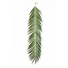 Phönixpalmen - artplants.de