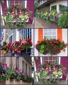 Plants For Window Boxes 4 iTs Home Ideas is part of Window box plants - Plants For Window Boxes 4 Window Box Plants, Window Box Flowers, Balcony Plants, Window Planter Boxes, Flower Boxes, Sun Flowers, Outdoor Spa, Outdoor Gardens, Belle Plante