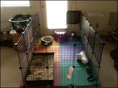 My first Bunny - BinkyBunny.com - House Rabbit Information Forum - BinkyBunny.com - BINKYBUNNY FORUMS - HOUSE RABBIT Q & A