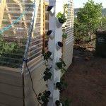 DIY Vertical Aeroponic System.