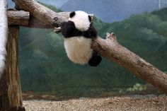 Hang in there, Mei Lun!