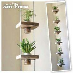 Hanging plants                                                                                                                                                                                 Mais