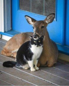 Animals And Pets, Baby Animals, Funny Animals, Cute Animals, Beautiful Creatures, Animals Beautiful, Unlikely Animal Friends, Alley Cat, Animal Pictures