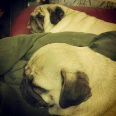 Sleepy Sunny and Rosy on a lazy Sunday night