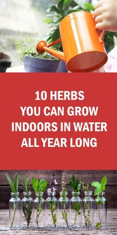Indoor Vegetable Gardening 10 Herbs You Can Grow Indoors in Water All Year Long Indoor Vegetable Gardening, Home Vegetable Garden, Organic Gardening, Container Gardening, Herb Gardening, Herbs Garden, Herb Garden Indoor, Indoor Herbs, Gardening Blogs
