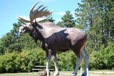 Big moose in Tomahawk, Wisconsin