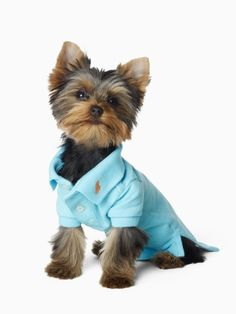 You can't go wrong with a classic Polo shirt for your furbaby!