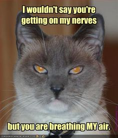 grumpy cat, making him mad - Dump A Day Haha Funny, Funny Cats, Funny Animals, Cute Animals, Funny Stuff, Funny Shit, Funny Things, Cat Stuff, Funny Jokes