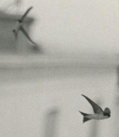 The Andalusian Swallows Bernard Plossu