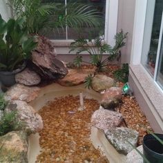 Jardim de inverno com pedras Grandes