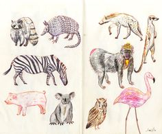 Some quick pen and color pencil animal doodles from my pink moleskine sketchbook. I spend way too much time looking at pictures of cute animals on Zooborns…..