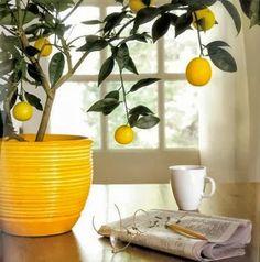 Stunning orange trees