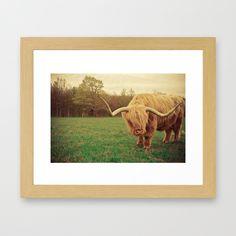 Scottish Highland Steer - regular version Framed Art Print, wall art, fine art photograph, home decor