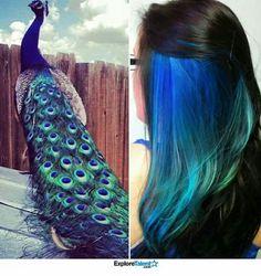 Peacock Peek-a-boo