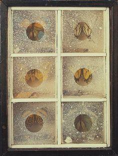 Joseph Cornell - Untitled (Butterfly Habitat)