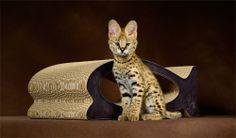 cat furniture cat-on Le Fish premium cat scratcher - handmade in Germany