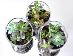 love this idea for holiday gifts - DIY terrarium + care info… Edit: LOVE this idea, a way to blend DIY with holiday gift giving!