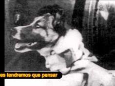 La perra Laika, el primer ser vivo que viajó al espacio.