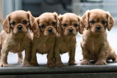 Puppies! Oh do I want a puppy!!
