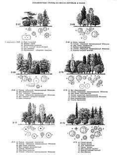Группы деревьев в саду