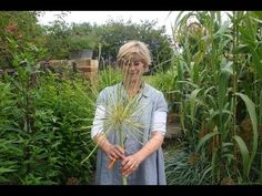 What to do with your allium seedheads - YouTube